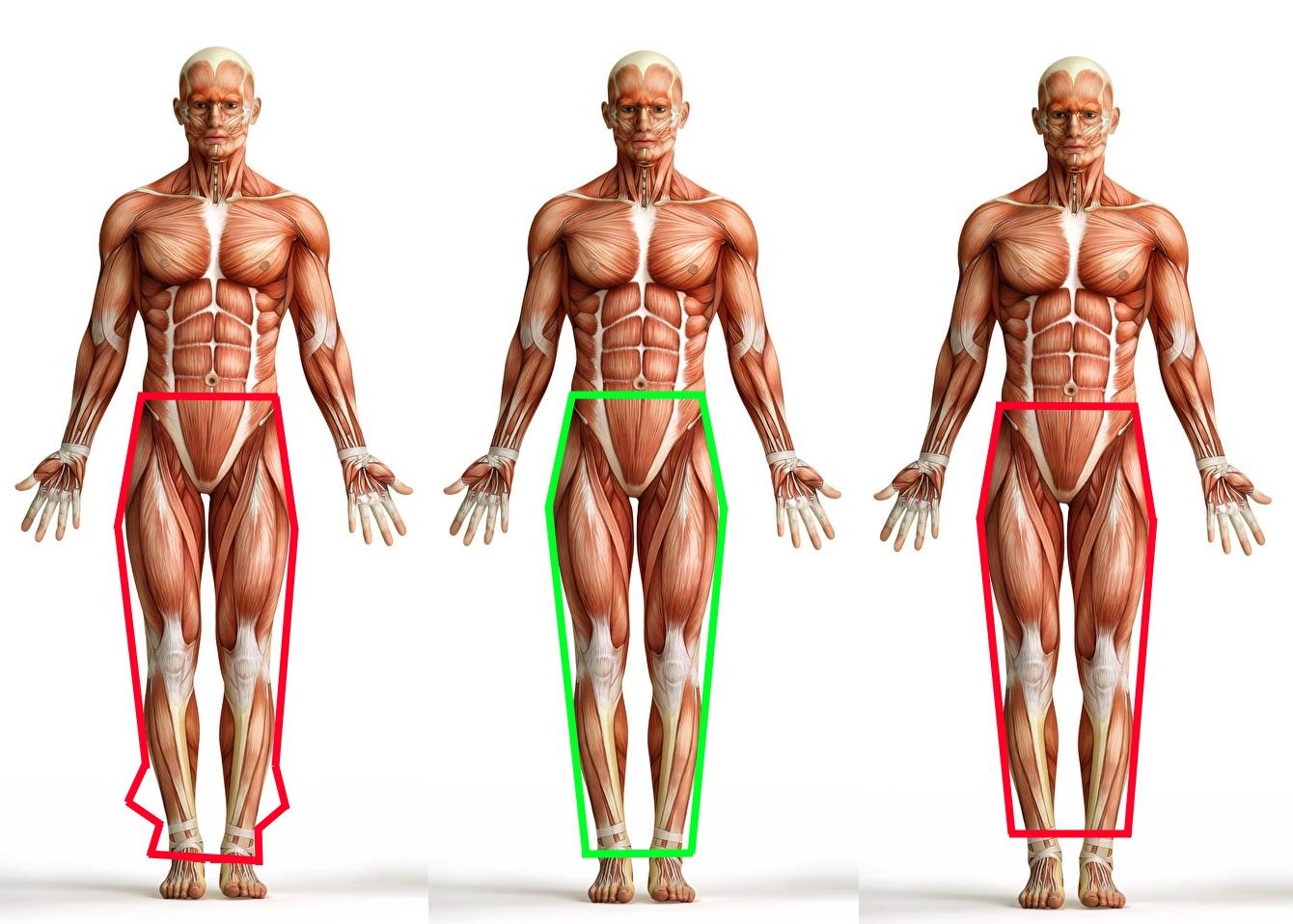 Le pantalon trop long élargit la silhouette dans le bas alors qu'elle doit justement s'affiner à cet endroit pour conserver une projection en V. Le pantalon trop court réduit la hauteur perçue de la jambe.