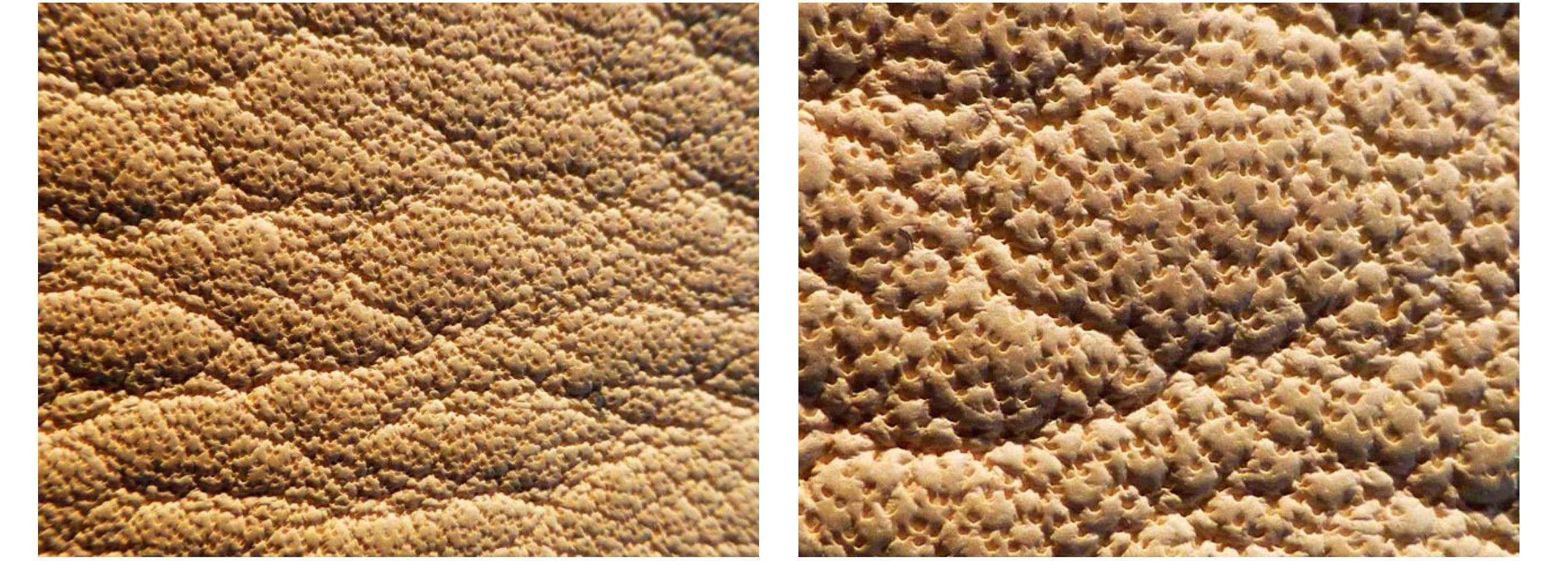 Un cuir aniline, les pores de la peau sont parfaitement visibles. (source colourlock)